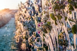 3 Common Sprinkler Winterization Mistakes and How to Avoid Them